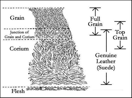 full grain leather illustration