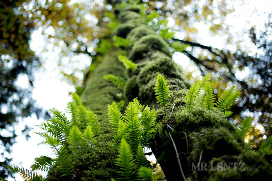 calm ferns growing ona tree